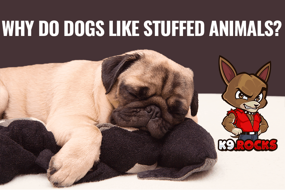 Why Do Dogs Like Stuffed Animals?