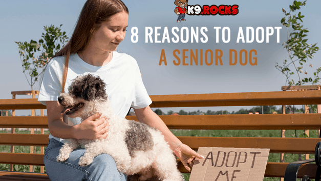 8 Reasons to Adopt a Senior Dog