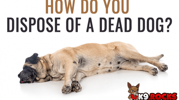 How Do You Dispose Of A Dead Dog?
