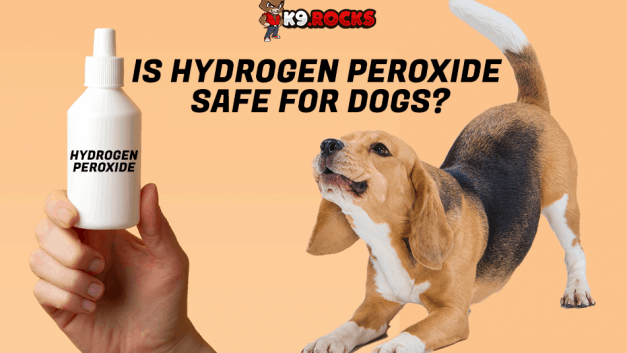 Is Hydrogen Peroxide Safe For Dogs?