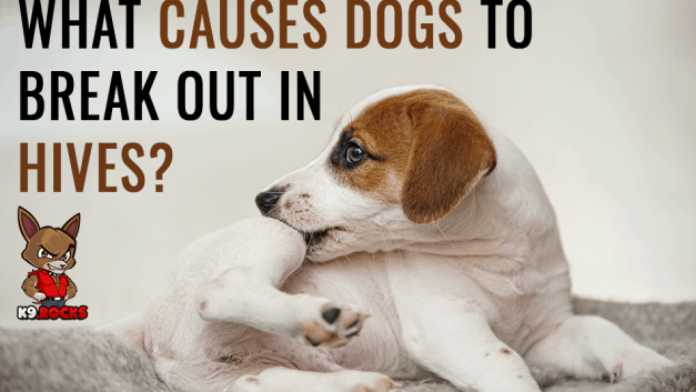 What Causes Dogs To Break Out In Hives?