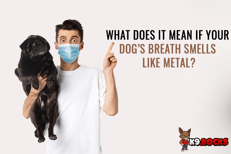 What Does It Mean If Your Dog's Breath Smells Like Metal?
