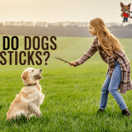 Why Do Dogs Like Sticks?