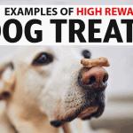 11 Examples of High Reward Dog Treats