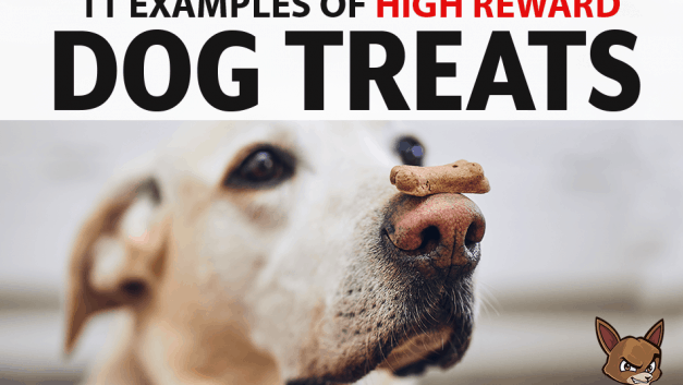 11 Examples of High Reward Dog Treats