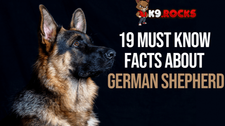 19 MUST Know Facts About German Shepherd