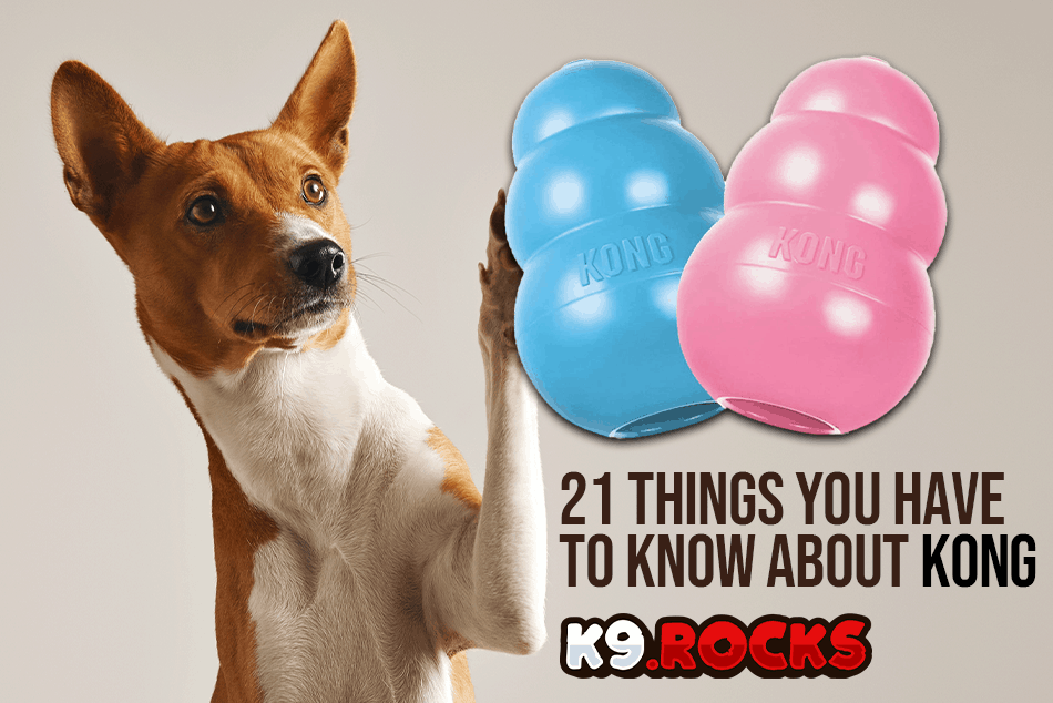 21 Things You HAVE to Know About Kong