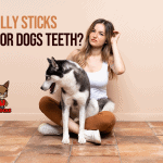 Are Bully Sticks Good for Dog's Teeth?