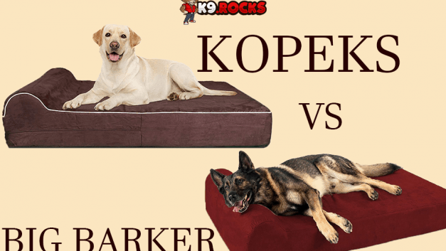 Big Barker vs Kopeks