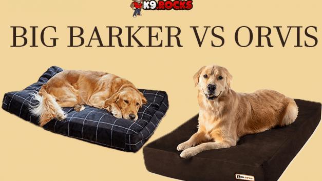 Big Barker vs Orvis