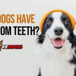 Do Dogs Have Wisdom Teeth?