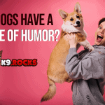 Do Dogs Have a Sense of Humor?