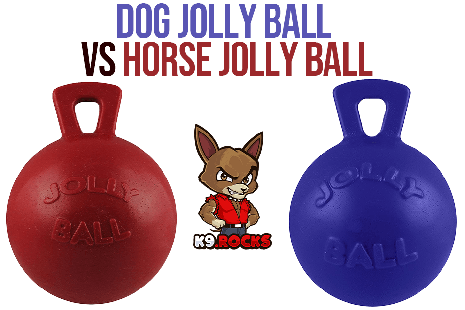 Dog Jolly Ball vs Horse Jolly Ball