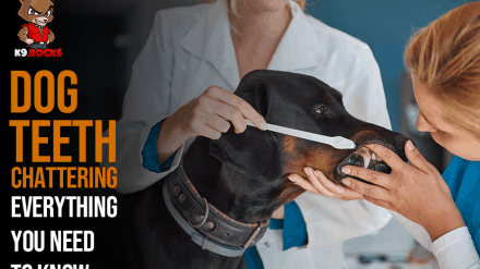 Dog Teeth Chattering: Everything You Need To Know