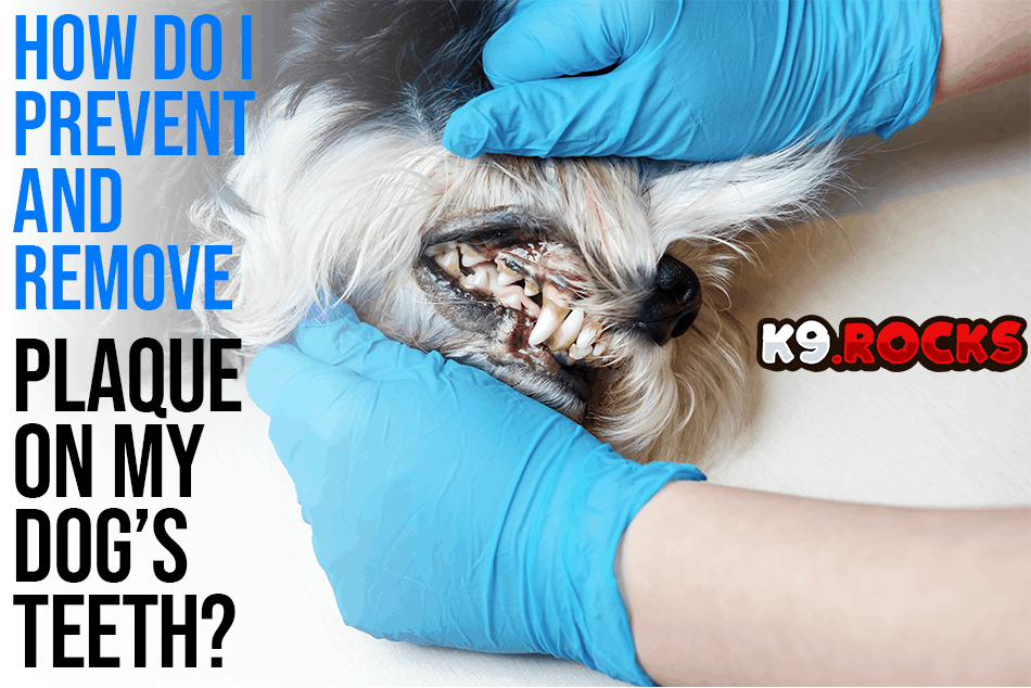 How Do I Prevent and Remove Plaque on My Dog's Teeth?