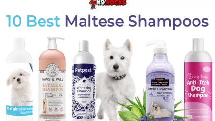 10 Best Maltese Shampoos