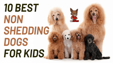 10 Best Non Shedding Dogs for Kids