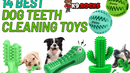 14 Best Dog Teeth Cleaning Toys