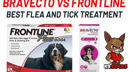 Bravecto vs Frontline: Best Flea and Tick Treatment