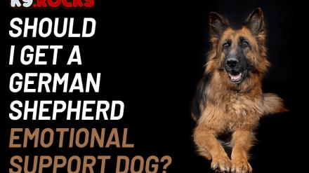 Should I Get a German Shepherd Emotional Support Dog?