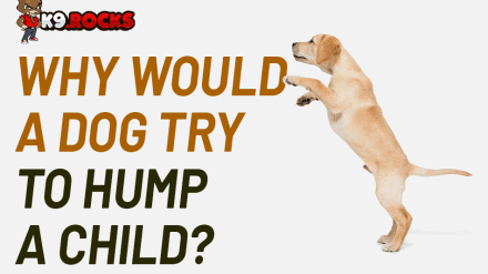 Why Would a Dog Try To Hump a Child?