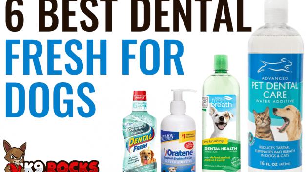 6 Best Dental Fresh for Dogs