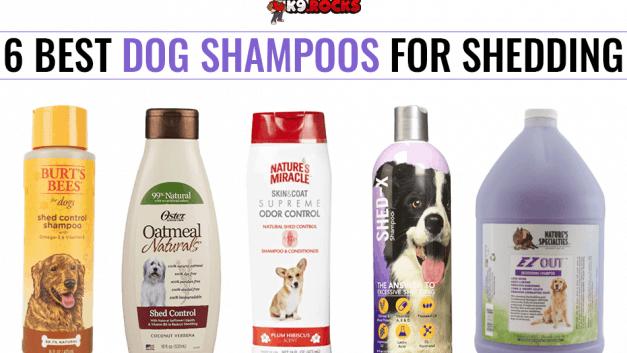 6 Best Dog Shampoos for Shedding