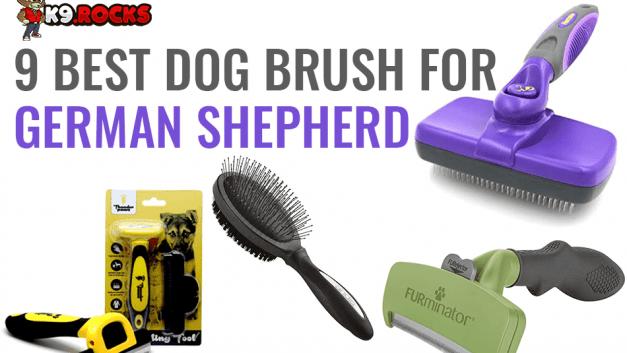9 Best Dog Brush for German Shepherd