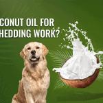 Do Coconut Oil For Dog Shedding Work?