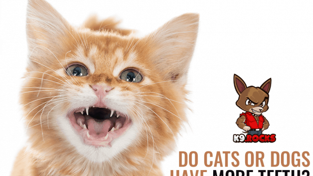 Do Cats Or Dogs Have More Teeth?