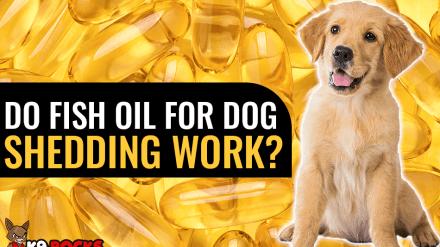 Do Fish Oil For Dog Shedding Work?