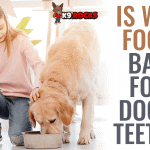 Is Wet Food Bad For Dogs' Teeth?