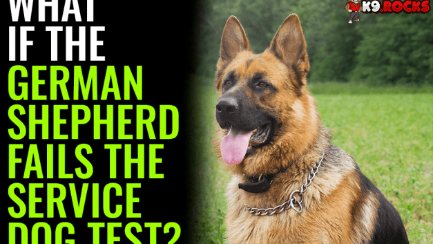 What If The German Shepherd Fails The Service Dog Test?