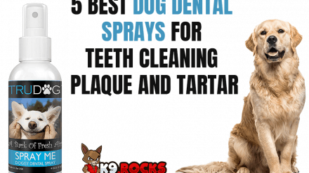 5 Best Dog Dental Sprays For Teeth Cleaning Plaque and Tartar