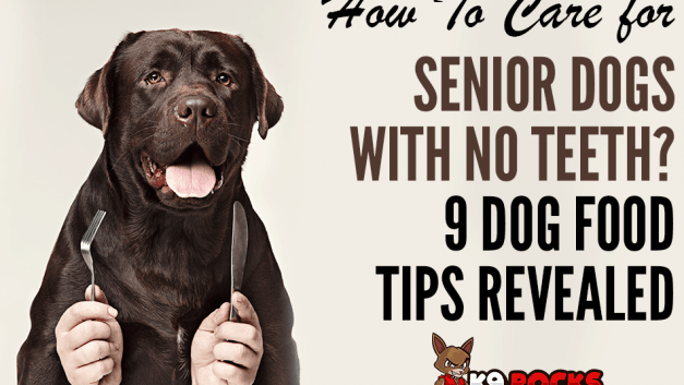 How To Care for Senior Dogs with No Teeth? 9 Dog Food Tips Revealed