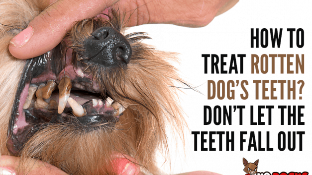 How To Treat Rotten Dog's Teeth? Don't Let The Teeth Fall Out