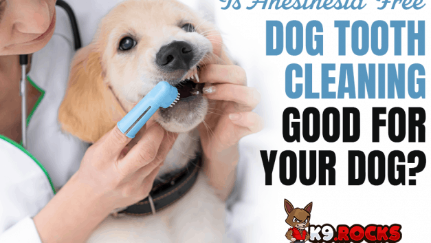 Is Anesthesia Free Dog Tooth Cleaning Good For Your Dog?