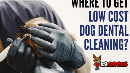 Where To Get Low Cost Dog Dental Cleaning?