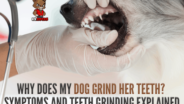Why Does My Dog Grind Her Teeth? Symptoms and Teeth Grinding Explained