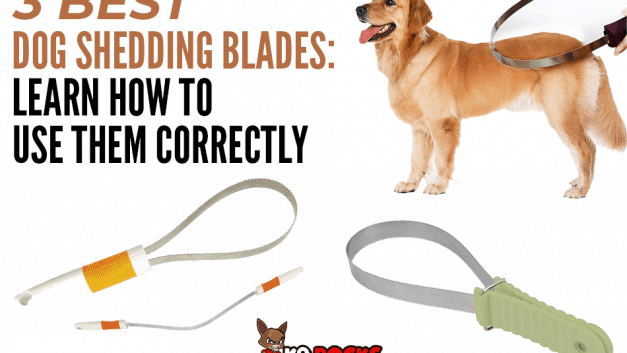 3 Best Dog Shedding Blades: Learn How To Use Them Correctly