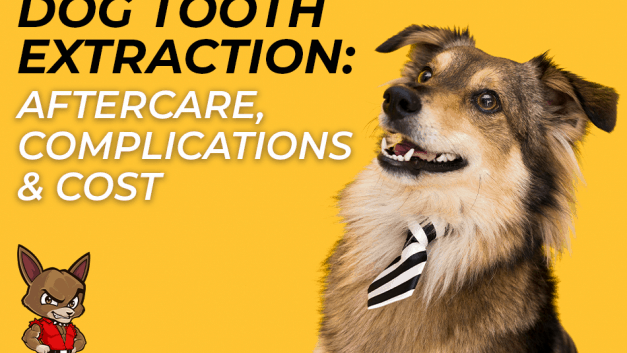 Dog Tooth Extraction: Aftercare, Complications & Cost