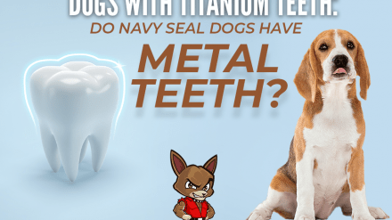Dogs With Titanium Teeth: Do Navy Seal Dogs Have Metal Teeth?