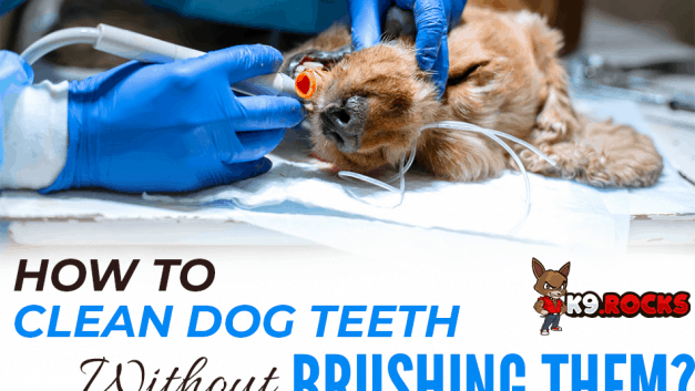 How To Clean Dog Teeth Without Brushing Them?