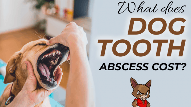What does Dog Tooth Abscess Cost?